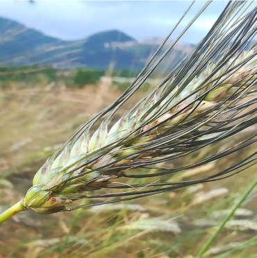 Qui si pratica Agricoltura Organico Rigenerativa: scopri come coltiviamo i terreni